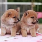 犬の登録・予防注射・死亡届など